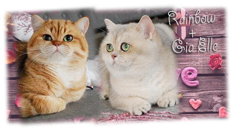Kittens F3 of Silver Legend 40216abbfe1