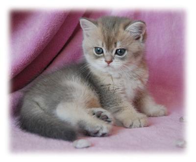 Výber mačiatka  383c55edfe6